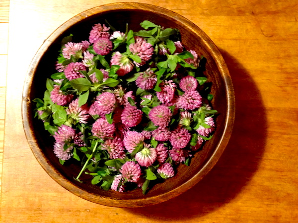 bowl of red clover